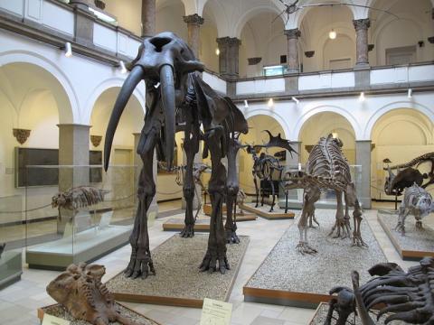 museo-munich.jpg